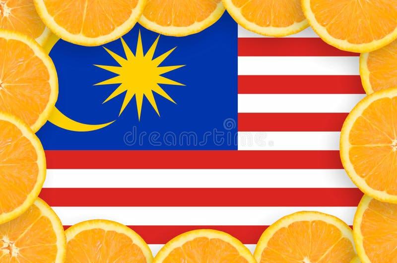 Флаг Малайзии в свежей рамке кусков цитрусовых фруктов бесплатная иллюстрация
