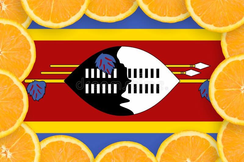 Флаг Свазиленда в свежей рамке кусков цитрусовых фруктов иллюстрация штока