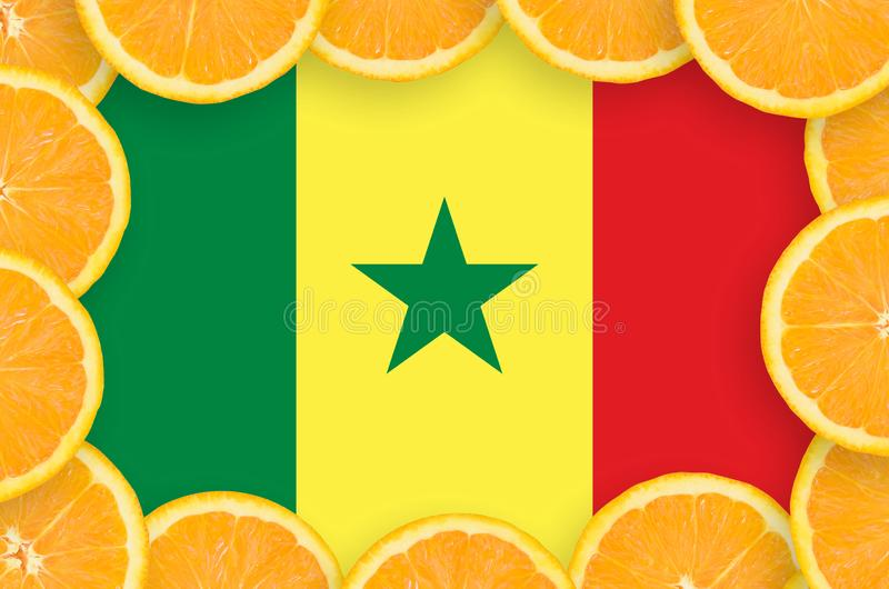 Флаг Сенегала в свежей рамке кусков цитрусовых фруктов иллюстрация вектора