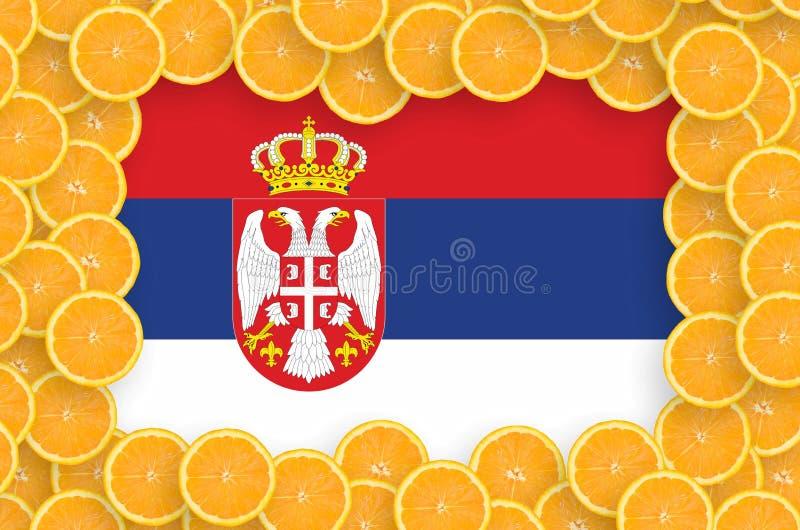 Флаг Сербии в свежей рамке кусков цитрусовых фруктов иллюстрация вектора
