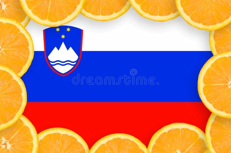 Флаг Словении в свежей рамке кусков цитрусовых фруктов бесплатная иллюстрация