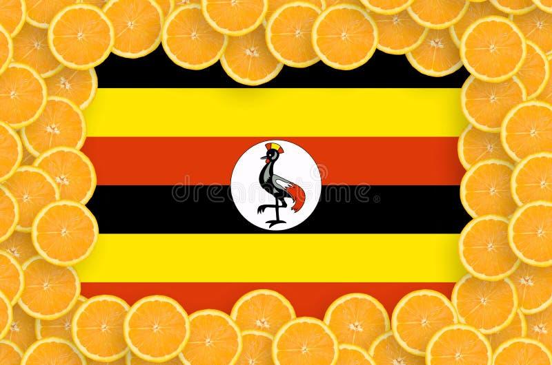 Флаг Уганды в свежей рамке кусков цитрусовых фруктов иллюстрация вектора