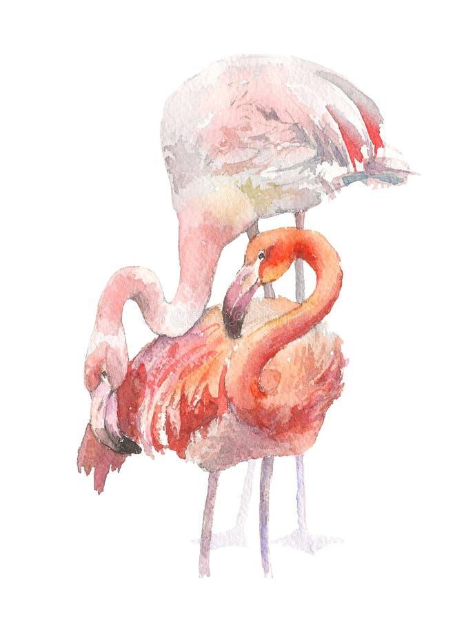 Фламинго 2 изолированный на белой предпосылке Иллюстрация акварели нарисованная рукой Rastra иллюстрация вектора