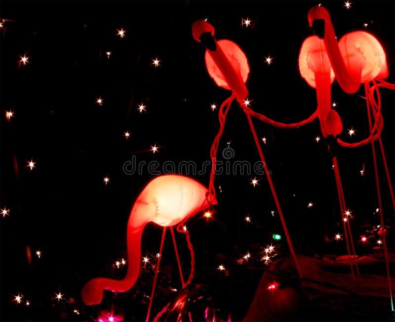 фламинго рождества стоковая фотография
