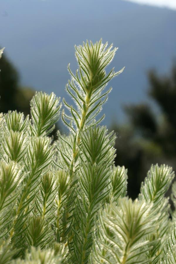 фланель bush стоковые изображения rf