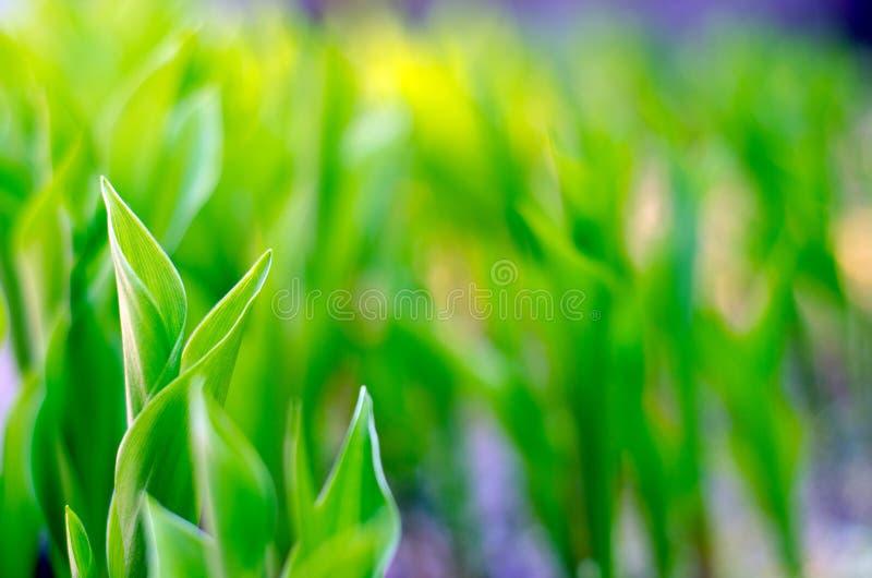 Флора лист природы макроса зеленого растения стоковое фото rf