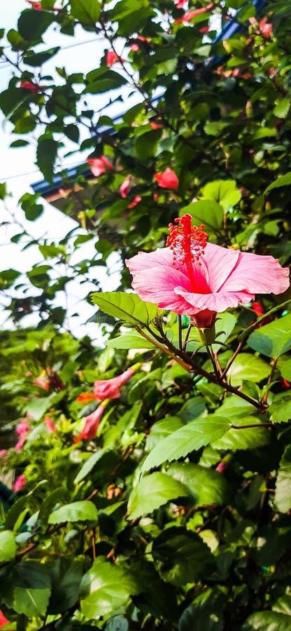 флора стоковые фото