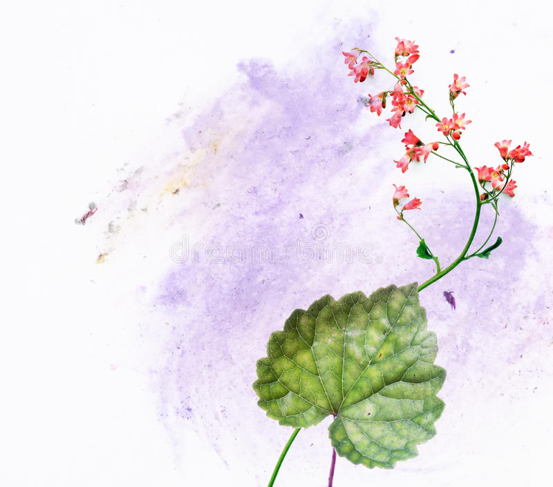 флора иллюстрация штока