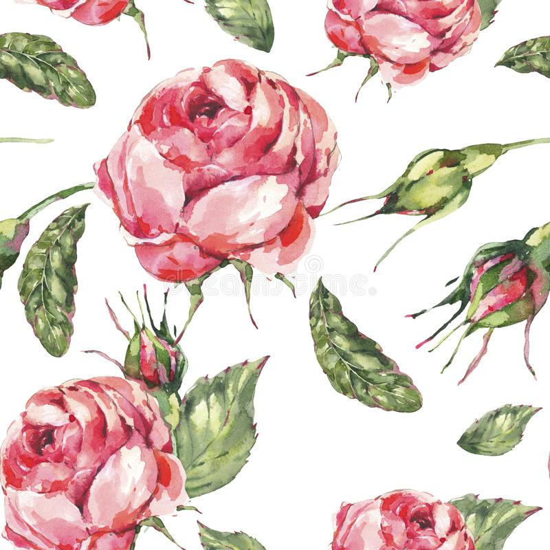 Флористическая безшовная картина красной розы классической акварели винтажной, листьев, бутонов иллюстрация штока