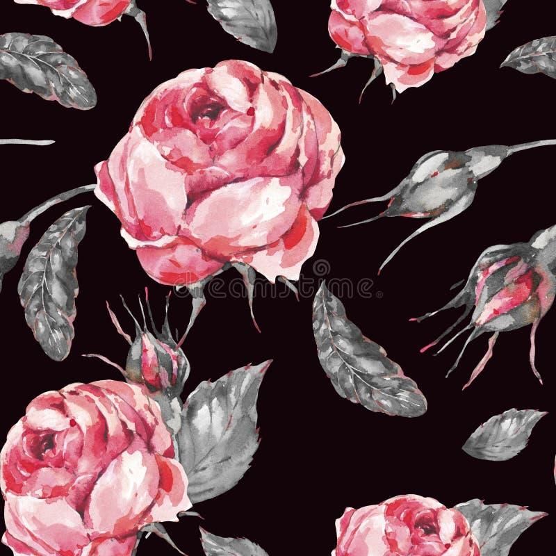 Флористическая безшовная картина красной розы классической акварели винтажной, листьев, бутонов иллюстрация вектора