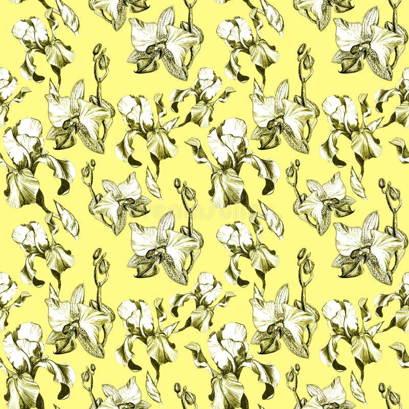 Флористическая безшовная картина с цветками радужки и орхидеи чернил руки вычерченными на желтой предпосылке Цветки выровнялись в иллюстрация вектора