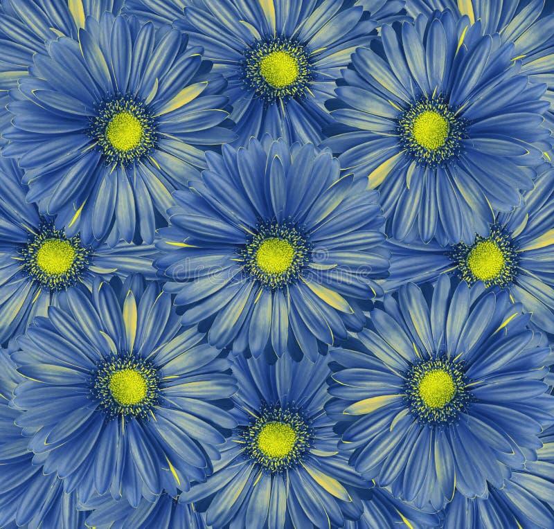 Флористическая голубая предпосылка Букет цветков от сине-желтых gerberas Конец-вверх стоковое изображение rf