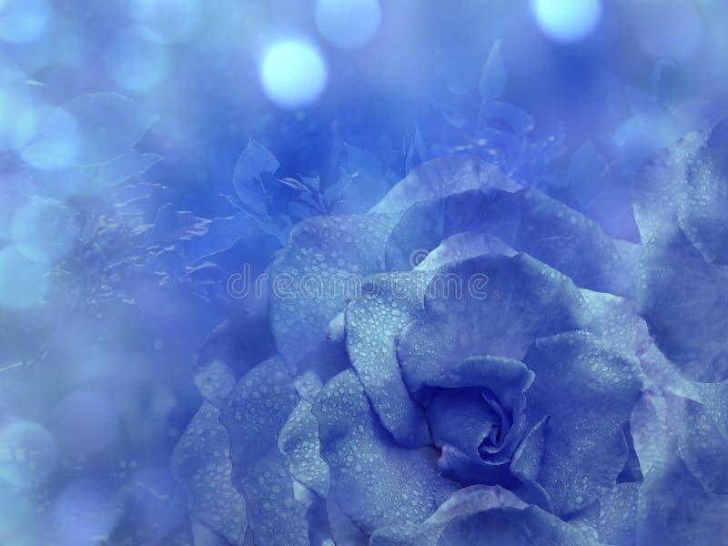 Флористическая голубая предпосылка от подняла Цветет состав Цветок голубой розы на прозрачном голубом bokeh предпосылки Конец-вве стоковая фотография rf