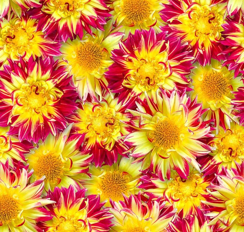 флористическая картина безшовная Хаотическое расположение цветков Красный цвет и стоковые изображения