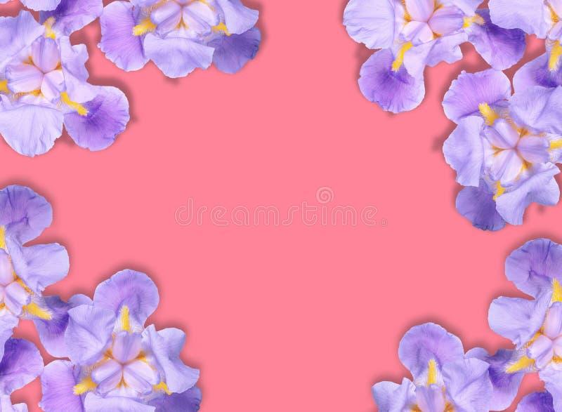Флористическая плоская положенная поздравительная открытка картин стоковые фотографии rf
