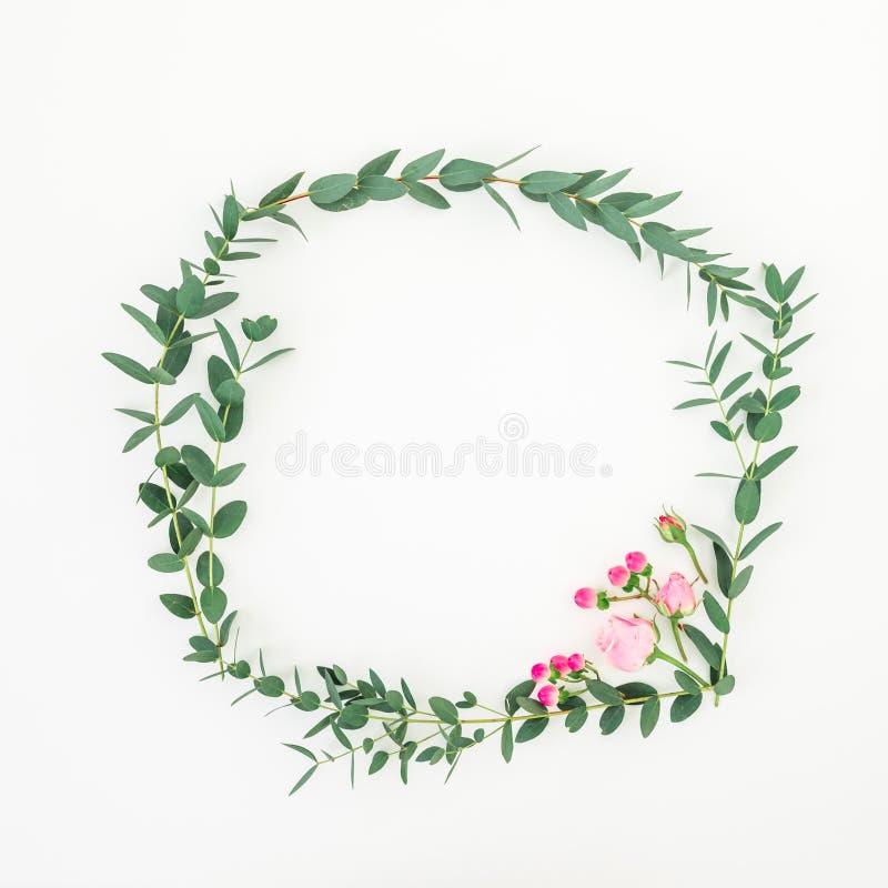 Флористическая рамка венка сделанная розовых роз и ветвей эвкалипта на белой предпосылке o стоковые фото