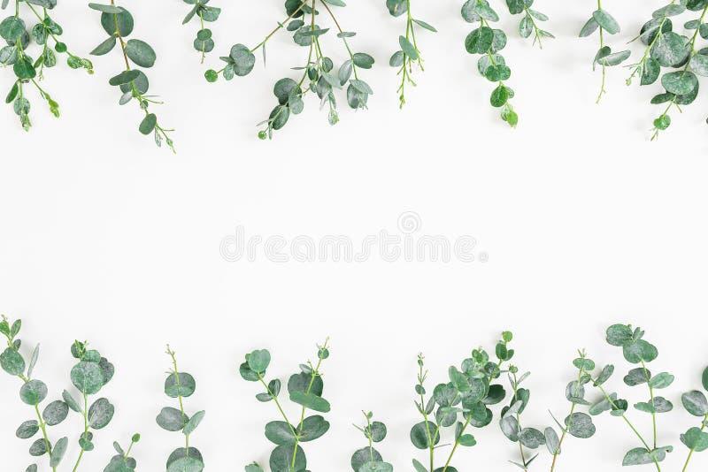 Флористическая рамка листьев евкалипта изолированных на белой предпосылке Плоское положение, взгляд сверху стоковое изображение