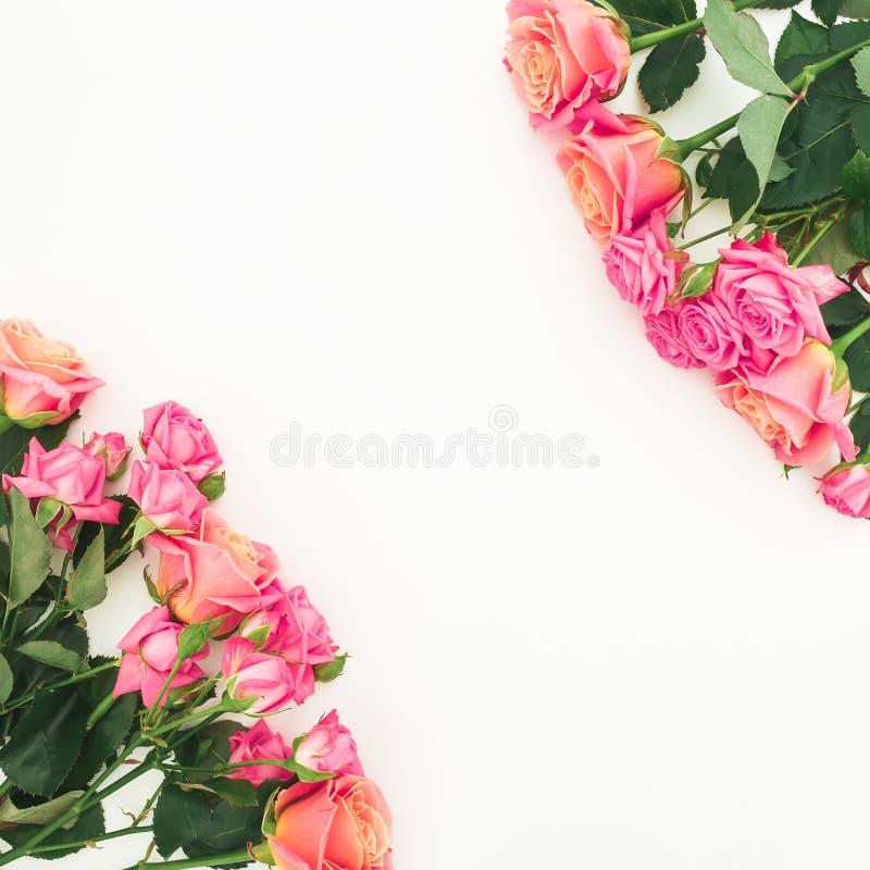 Флористическая рамка розовых букетов роз на белой предпосылке Плоское положение, взгляд сверху стоковое изображение