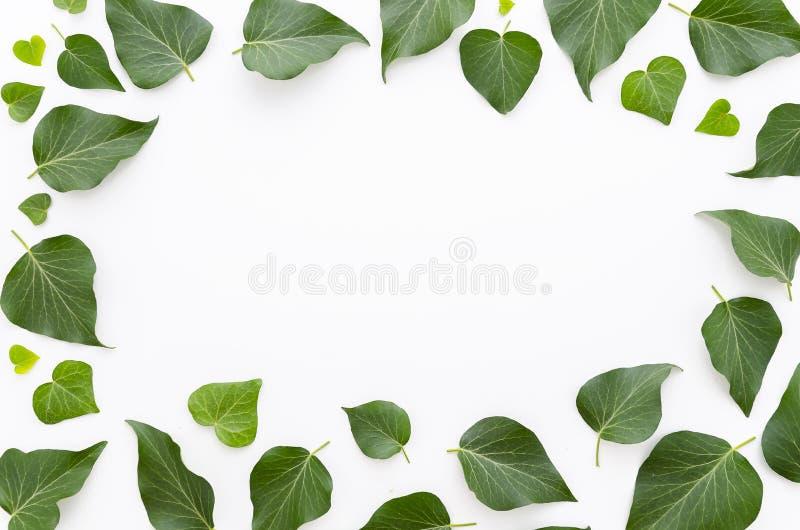 Флористическая рамка сделанная зеленого цвета выходит на белую предпосылку Плоское положение, взгляд сверху Скопируйте космос для стоковое изображение