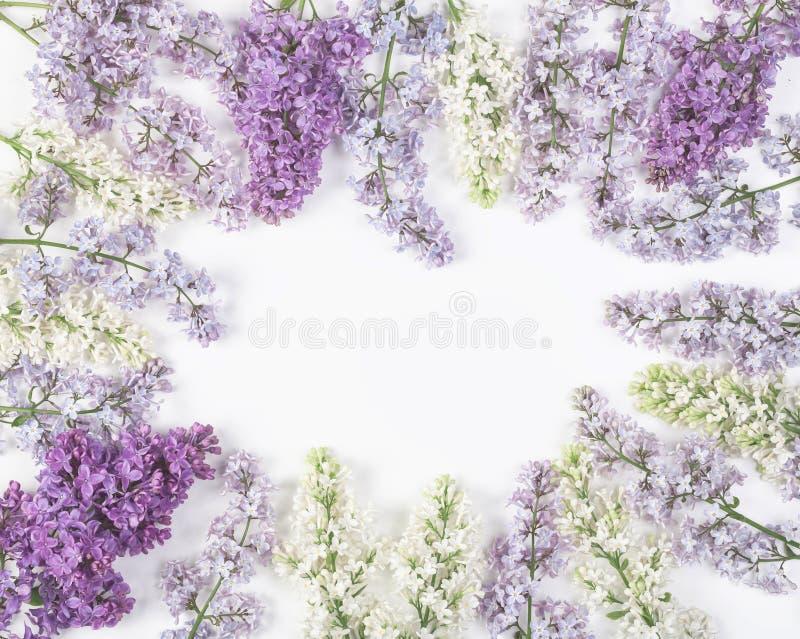 Флористическая рамка сделанная из изолированных цветков сирени весны на белой предпосылке Взгляд сверху с космосом экземпляра стоковая фотография rf