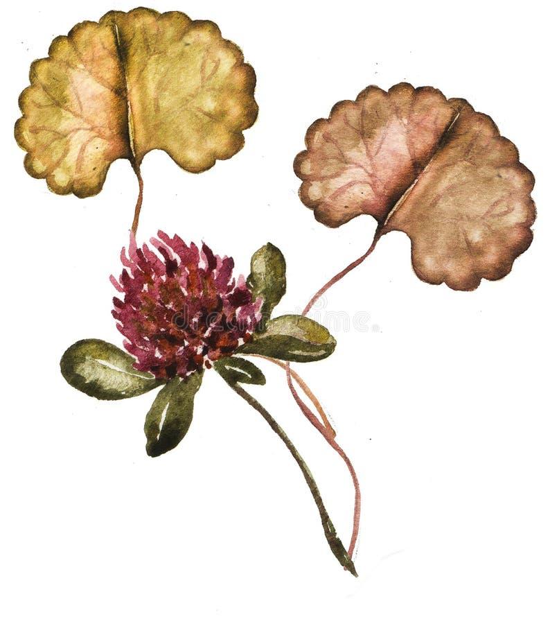 Флористическая рамка с клевером и вашим текстом, иллюстрацией акварели стоковое изображение rf