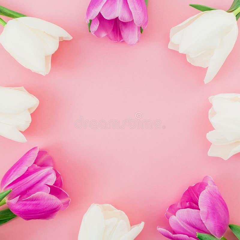 Флористическая рамка с тюльпанами цветет на розовой пастельной предпосылке Плоское положение, взгляд сверху Предпосылка времени в стоковое фото