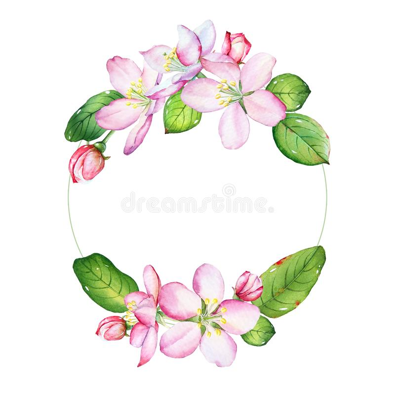 Флористическая рамка с цветками яблони акварели бесплатная иллюстрация