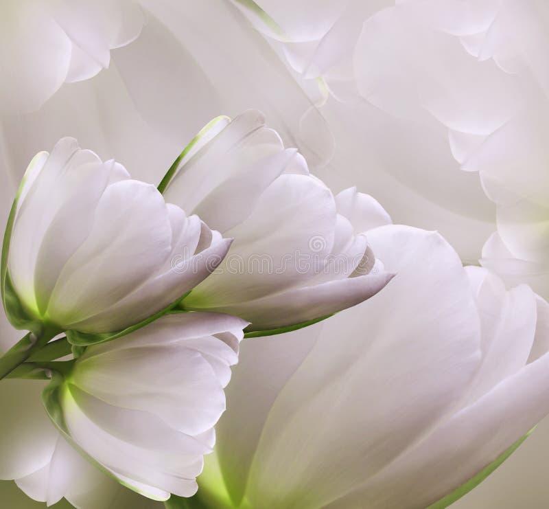 Флористическая розов-белая красивая предпосылка Состав весны цветка тюльпанов стоковые изображения