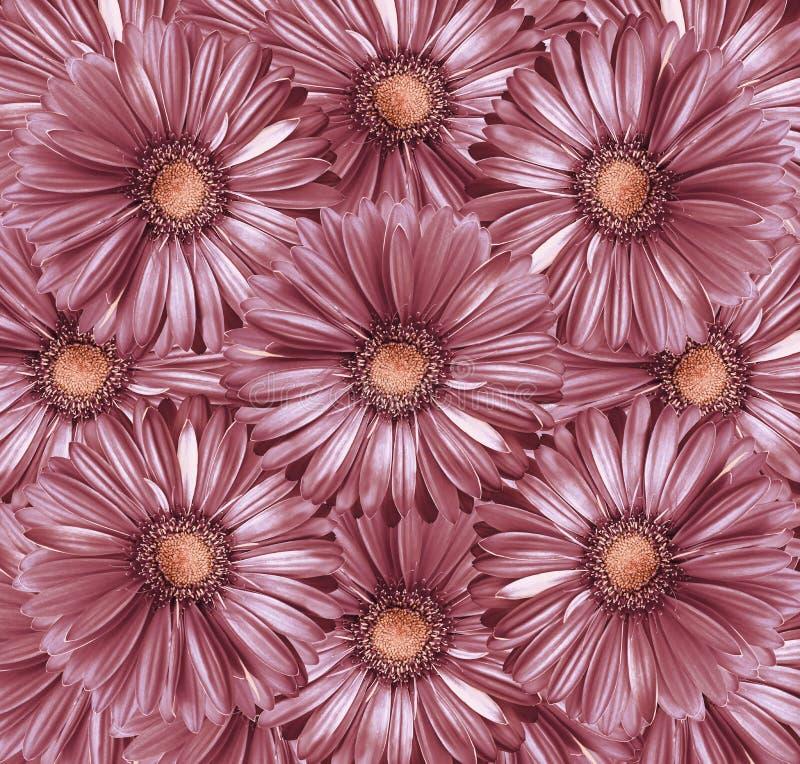 Флористическая светлая предпосылка красно-жемчуга Букет цветков от светлых красно-розовых gerberas Конец-вверх стоковые фотографии rf