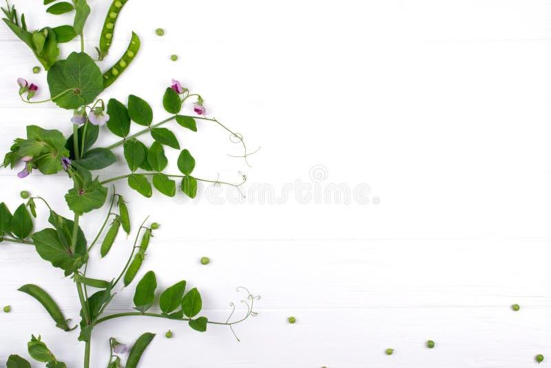 Флористическая herbaceous предпосылка Растущий завод горохов на белой предпосылке стоковая фотография