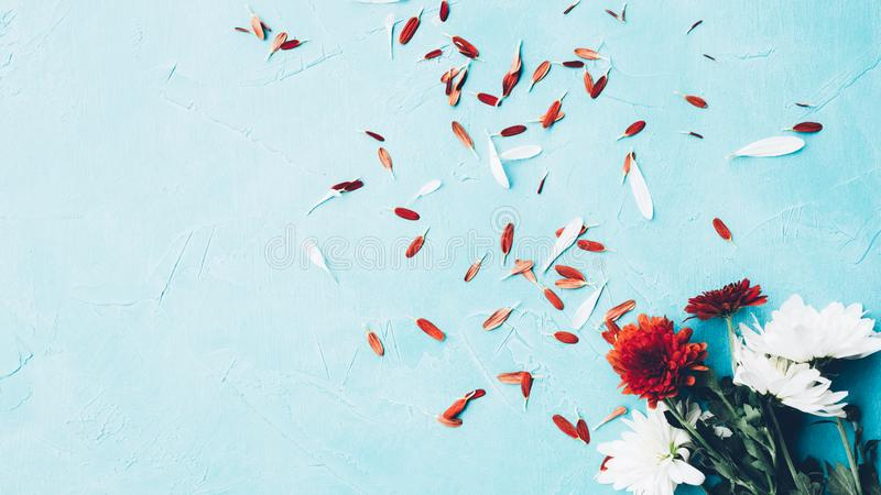 Флористические абстрактные лепестки цветка маргаритки предпосылки стоковое изображение rf