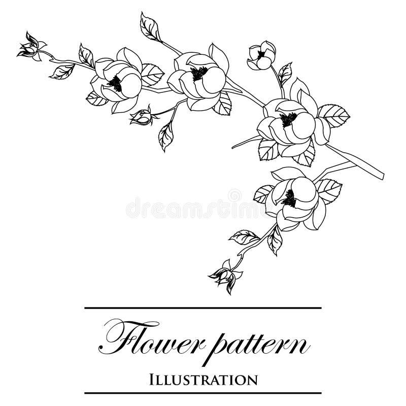 Флористические картины на белой предпосылке иллюстрация вектора