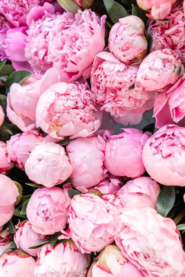 Флористические ковер или обои Предпосылка розовых пионов Свет утра в комнате Красивый цветок пиона для каталога или стоковая фотография