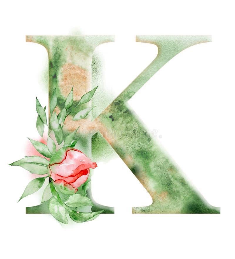 Флористический алфавит акварели Дизайн начального письма k вензеля с нарисованным рукой цветком пиона бесплатная иллюстрация