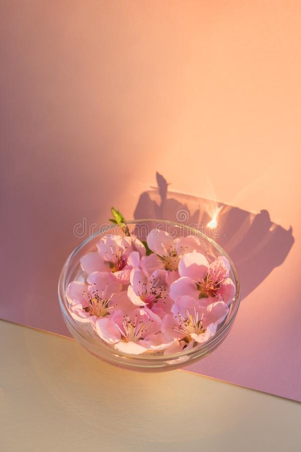 Флористический дизайн пинка нектарина цветет с отражениями солнец стоковое фото