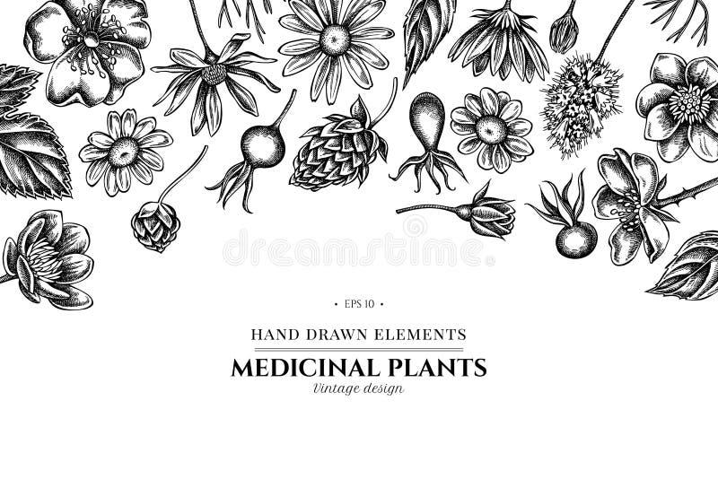 Флористический дизайн с черно-белым celandine, стоцветом, розой собаки, хмелем, артишоком Иерусалима, пиперментом иллюстрация штока