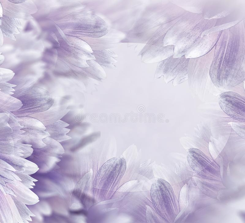 Флористический осветите - пурпурную красивую предпосылку Цветки и лепестки бело-красного георгина : r Поздравительная открытка f стоковое изображение