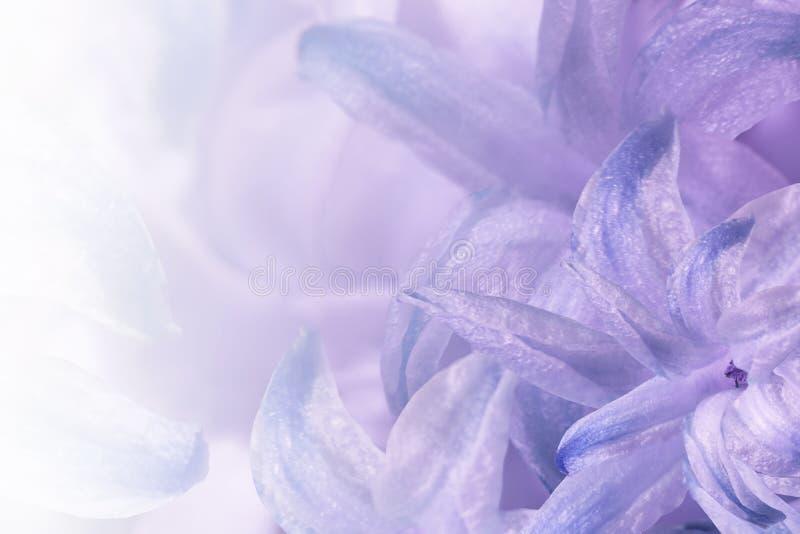 Флористический свет - пурпур - белая предпосылка Цветки бело-голуб-фиолетового конца-вверх гиацинта Коллаж цветка для открытки стоковые изображения