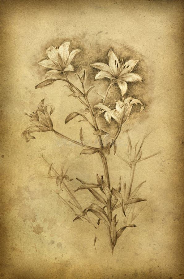 флористический эскиз иллюстрация вектора