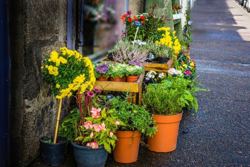 Флорист продавая ряд цветочных горшков стоковое фото