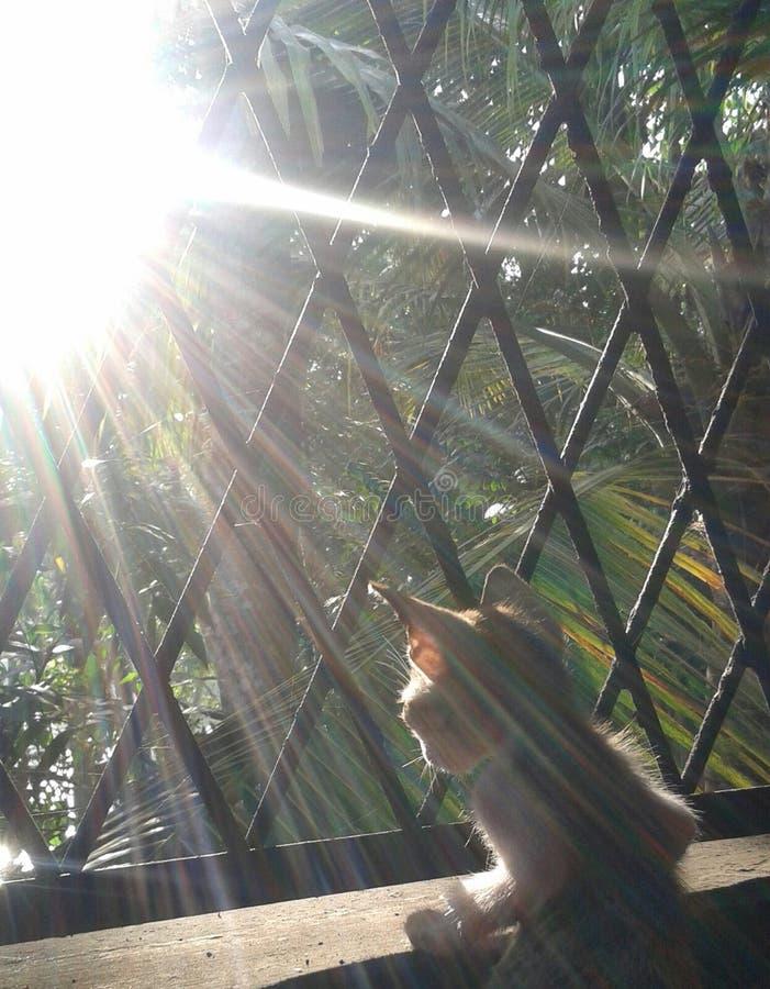 Флюиды утра когда котенок ищет его мама стоковые изображения rf