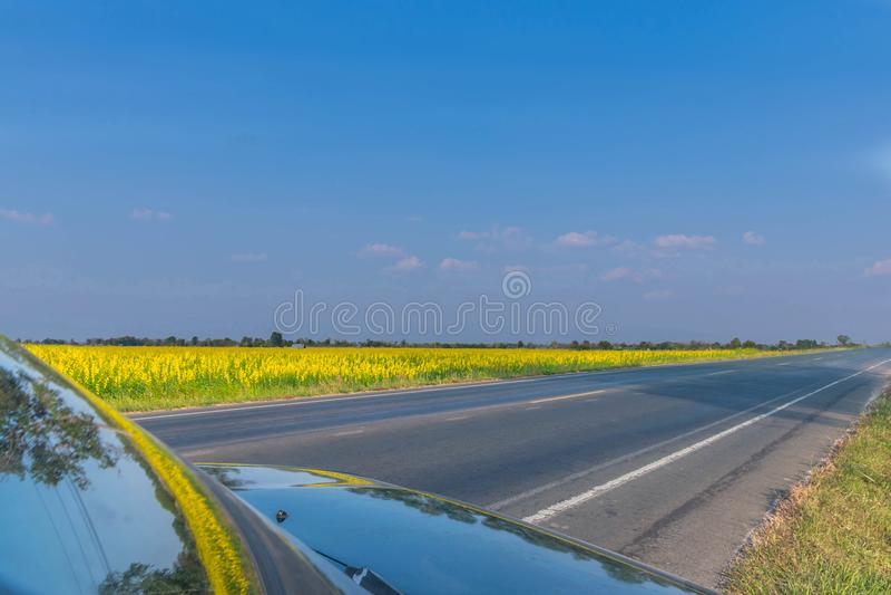 Фокус абстрактной нежности запачканный и мягкий дорога с цветком juncea Crotalaria, Leguminosae, полем завода, заводом фиксирован стоковые фото