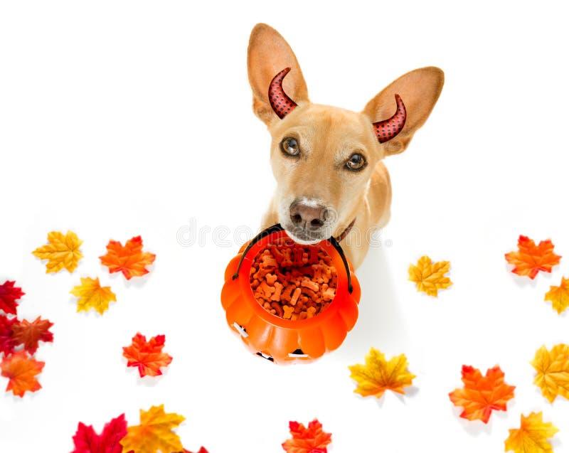 Фокус или обслуживание собаки призрака хеллоуина стоковая фотография