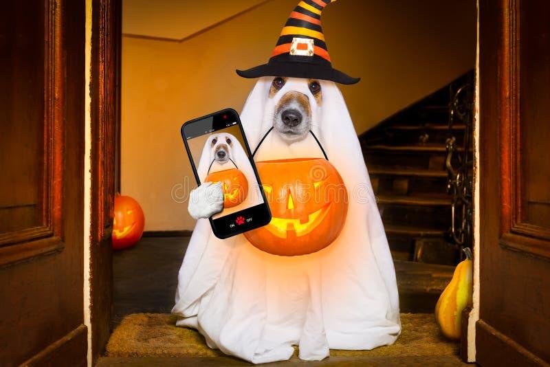 Фокус или обслуживание собаки призрака хеллоуина стоковая фотография rf