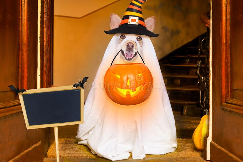 Фокус или обслуживание собаки призрака хеллоуина стоковое изображение