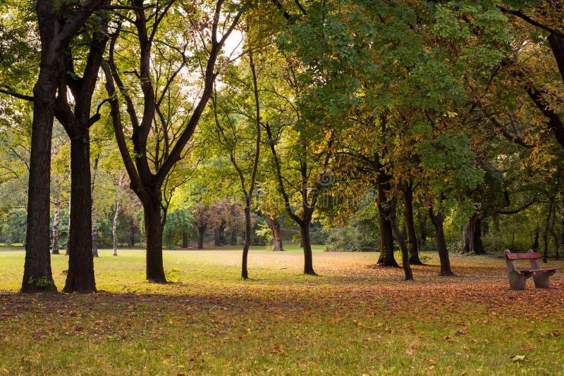 Фокус листьев осени селективный стоковое изображение