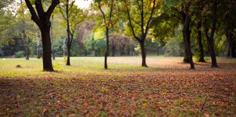 Фокус листьев осени селективный стоковое фото