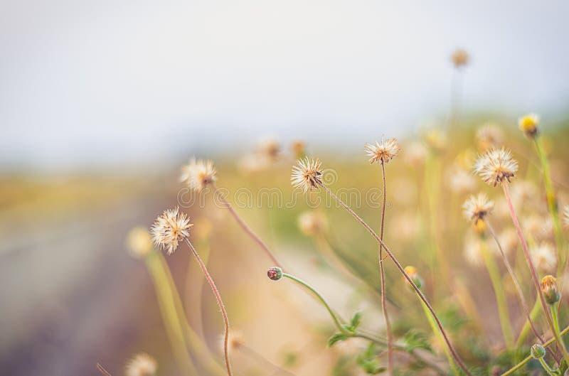 Фокус красивого цветного поглотителя цветка травы предпосылки винтажного мягкий стоковое фото rf