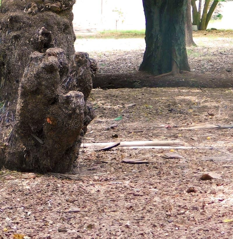 Фокус на дереве стоковые изображения rf