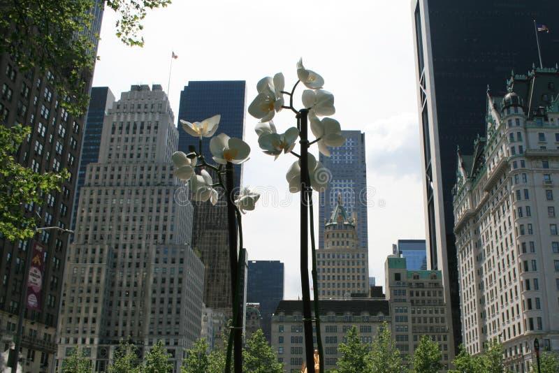 Фонарик в форме цветков Взгляд от центрального парка к Нью-Йорку стоковая фотография rf
